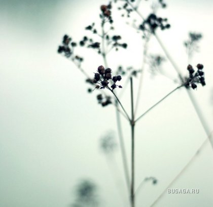 Красоты природы от Mylene Bressan