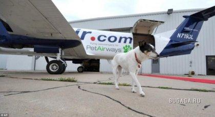 Самолет для собак