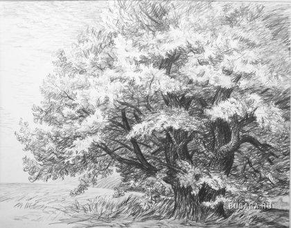 Рисунок карандашом от Виталия Губарева