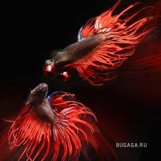 Рыбный креатив от фотографа Heru Suryoko