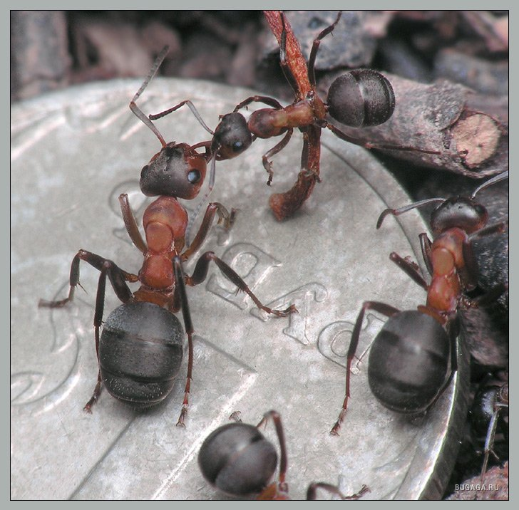 интернет-магазине все муравьи мелкие а один огромный уто это книги серии Хроники