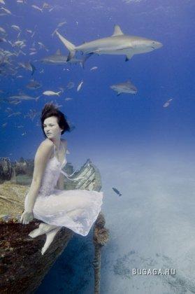 Тодд Эссик. Подводный мир