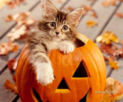 Да будет... осень!