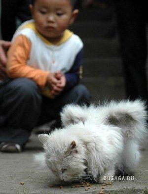 Крылатый кот