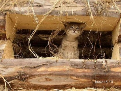 http://www.bugaga.ru/uploads/posts/2009-09/thumbs/1251880085_bugaga_ru-6.jpg