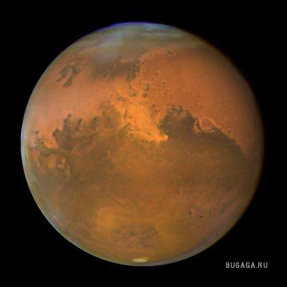 Марсианская черника