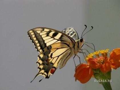 Интересные факты о насекомых