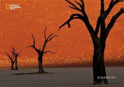 Свежие фото от National Geographic (21 фото)