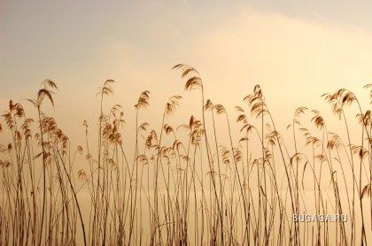 Работы фотографа Buszujacy-w-zbozu