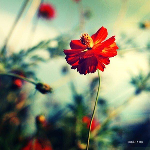 Цветы по одиночке