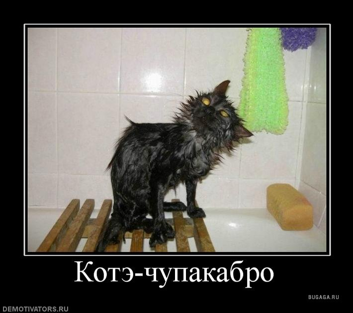 мокрая кошка демотиватор для троссов для