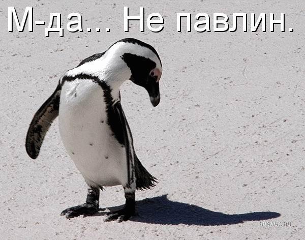 http://www.bugaga.ru/uploads/posts/2009-10/1256982068_e79fc1a9dc5d.jpg