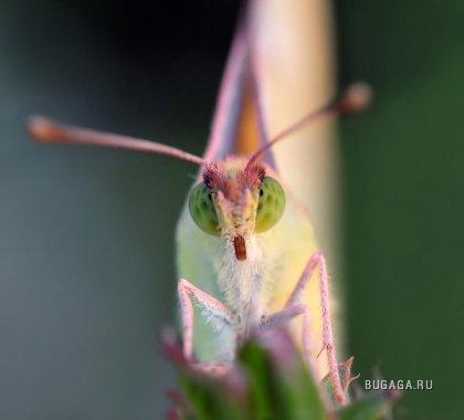 Макро: насекомые от фотографа Bonali Giuseppe