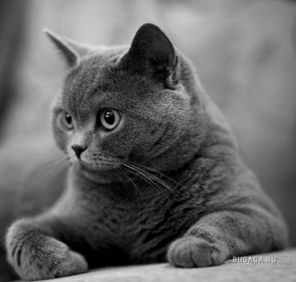 Серая кошачья подборка