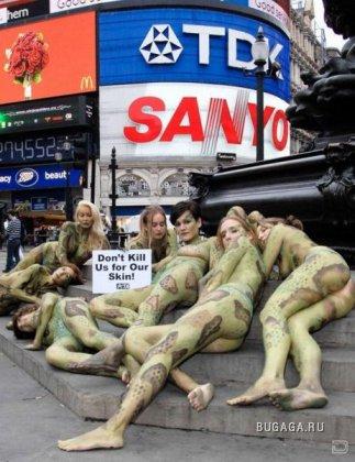 Акция в защиту несчастных рептилий