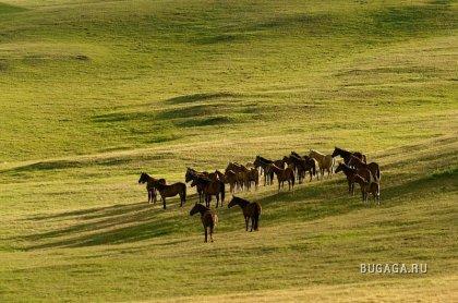 Казахские лошади