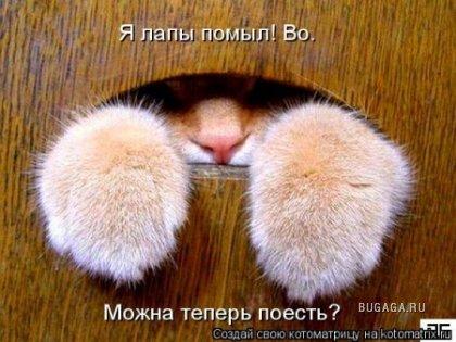 Из жизни котов и не только