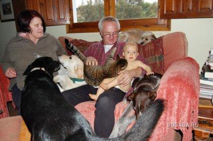 Факты про отношения людей и собак