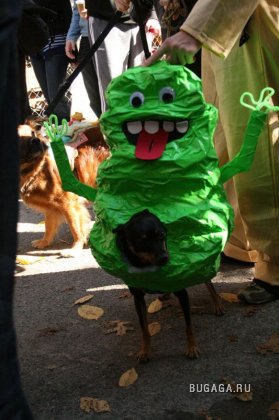 Собачий парад Halloween 2009