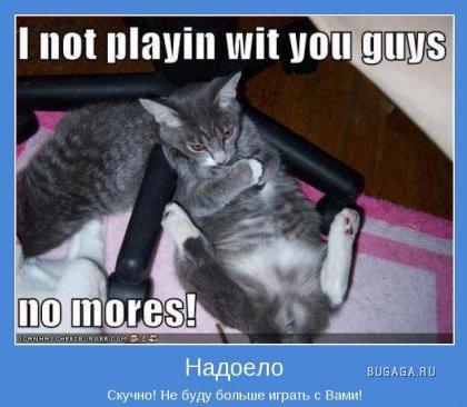 В мире котов (прикольная фотоподборка)
