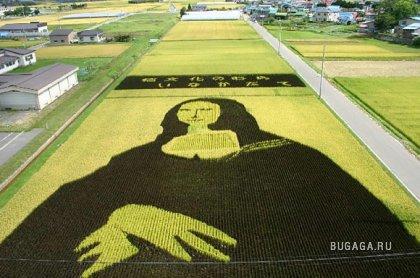 Картины рисом на полях