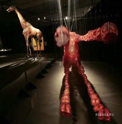 Выставка человеческого тела «Body Worlds»