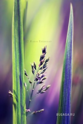 Нежные работы фотографа Karisca