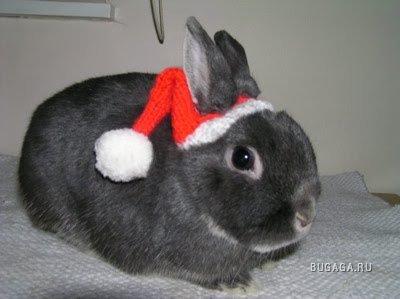 Животные в новогодних нарядах