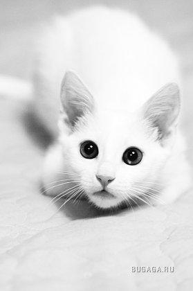 Кошачья подборка (2-ая часть)