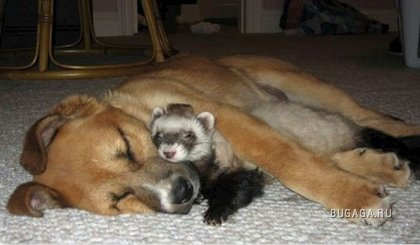 Необычная дружба животных