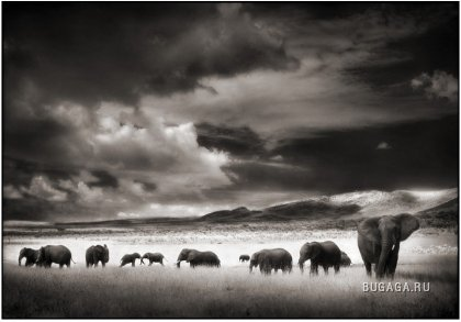 Животные от фотографа Nick Brandt