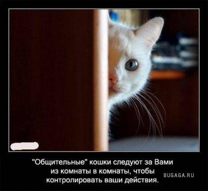 Интересные факты о кошках в картинках