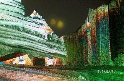 Лучшие микрофотографии от победителей конкурса Маленький мир