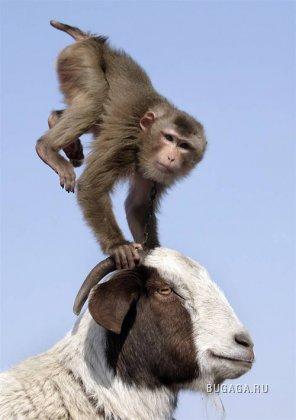 В мире животных. Часть 5