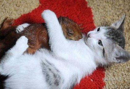 Кошки и белка