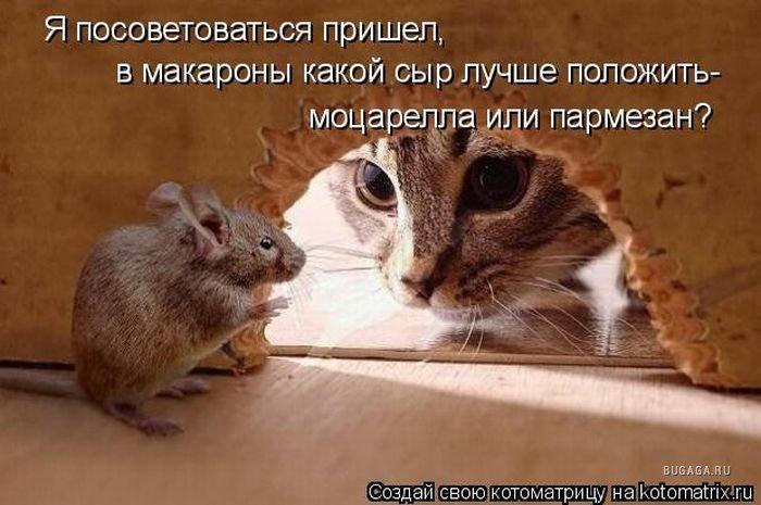 http://www.bugaga.ru/uploads/posts/2010-03/1269116131_kotomatrix_40.jpg