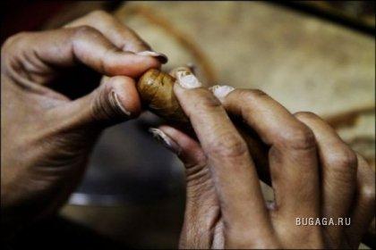 Производство кубинских сигар Cohiba