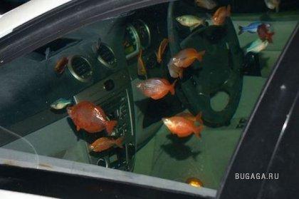 Аквариум в автомобиле