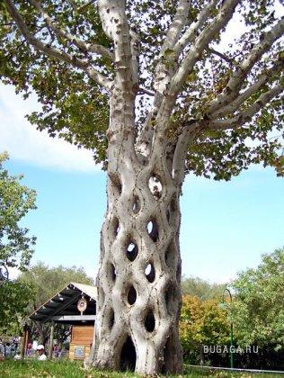Удивительные деревья