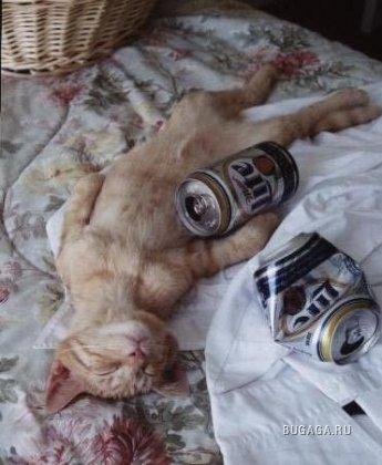 Фото-приколы: алкоголь и кошки (38 фото)