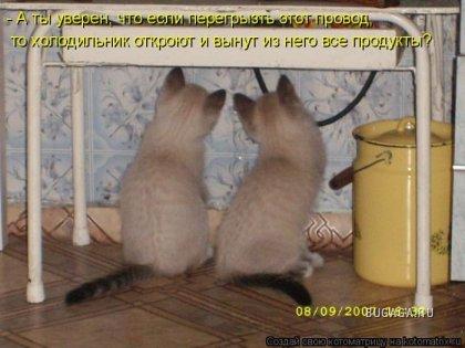 Котоматрицы (50 фото)