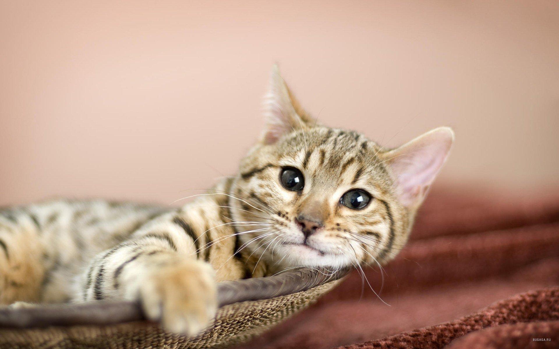 Открытки онлайн, картинки прикольных котят на рабочий стол