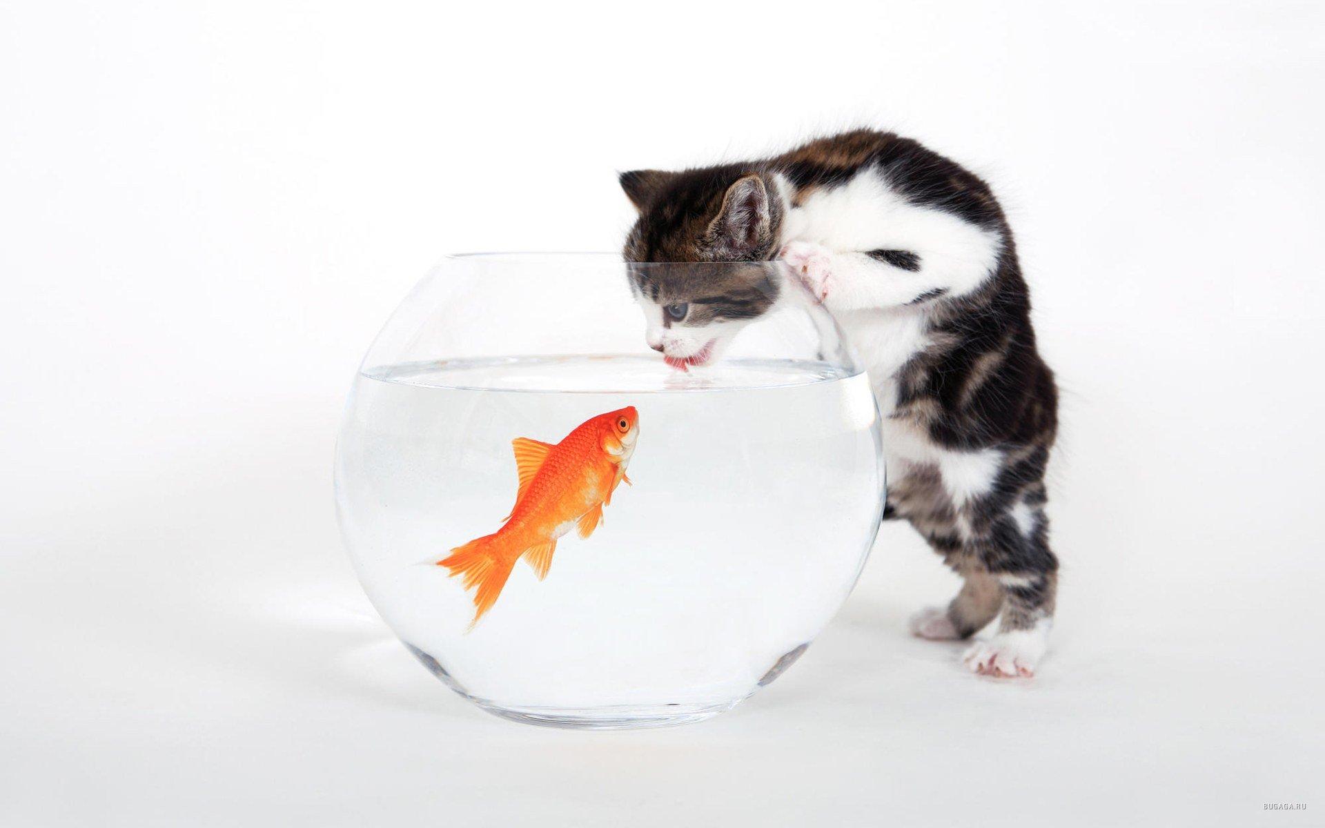 котик ловит рыбку бесплатно