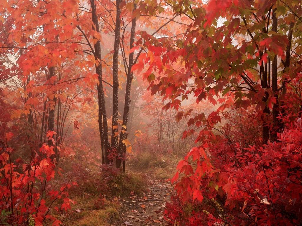 Времена года Осень - Природа Обои и Фото.