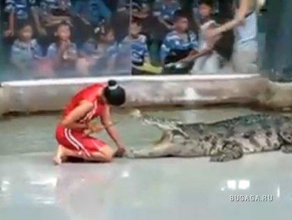 Экстремальный номер с крокодилом