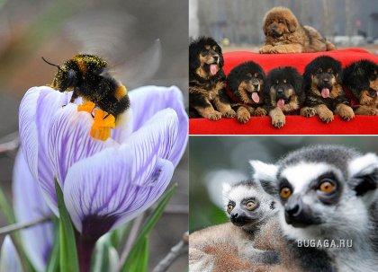 В мире животных. Часть 6