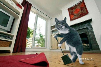 Кошка-домработница