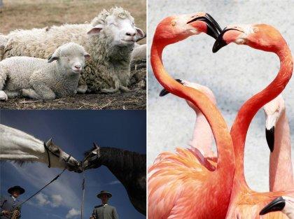 В мире животных: фотографии недели