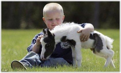 Самый маленький жеребёнок в мире родился в Британии