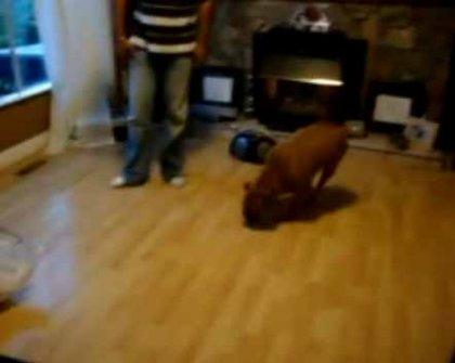 Собака сражается со своей тенью